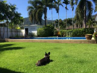 Bug enjoying paradise over the holidays