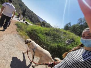 Going for a walk in Málaga's mountains with our Shelter's friends