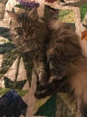 My Siberian is a big fan of my quilts