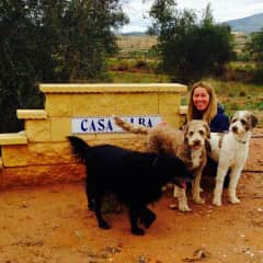 Our very special TrustedHousesitters friends Oso, Sojou and Louey from Pinoso, Spain