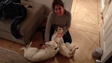 Mariana with Banjo and Sydney - Last year house sit in Banstead