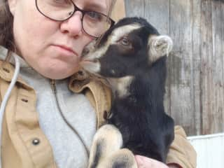 A good friend who is a veterinary technician owns dairy goats and I was there  caring for this one and getting goat kisses.