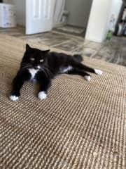 This jute rug also makes a good scratching mat