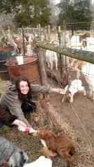 Feeding baby goats in NC