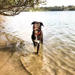 Jessie at the local dog beach in Callan Park