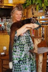 A civet cat, in Bali