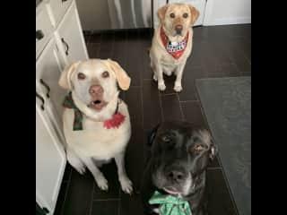 Daisy, Zeke, and my granddog, Eve