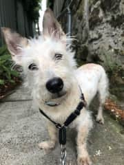 I'm Lily a Maltese Jack Russell Cross,.