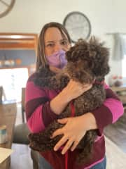 This is Joshi, a sweet miniature poodle rescue I welcomed and trained for his humans.