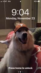 This picture is of our dear departed Charlie who loved the UT Longhorns