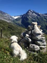 With Lucky walking in the mountains