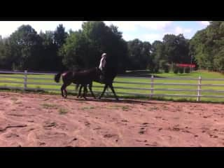This is my on my old horse named baby; ponying her daughter Daisy;. This is at our farm we had in Pennsylvania.