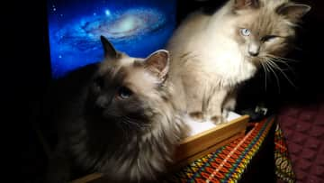 Lulu and Cosmo