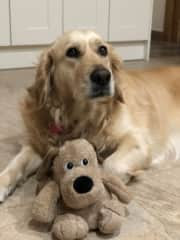 This is Poppy our wonderful Golden Retriever. Poppy is 3.5 years and loves to play with her toys.