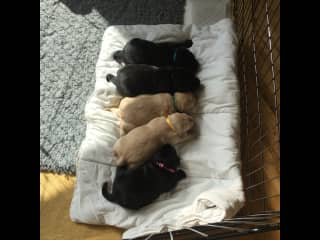 Goldie and her brothers and sisters