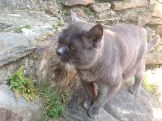 Zapphir - a most amazing 22 year old cat