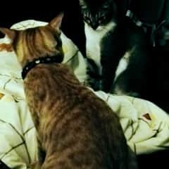 Catsitting in KL