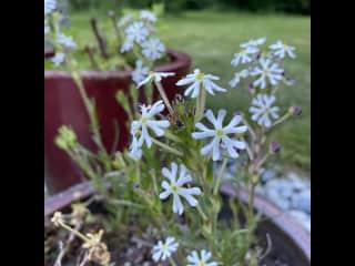 Flower abound