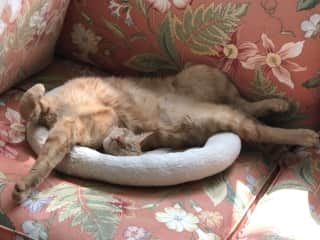 This is how Elmo likes to sleep in his catbed.