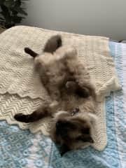 Milo on his favorite blanket