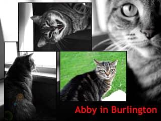 Abby in Burlington