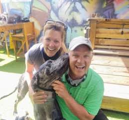Dog bar St Pete FL