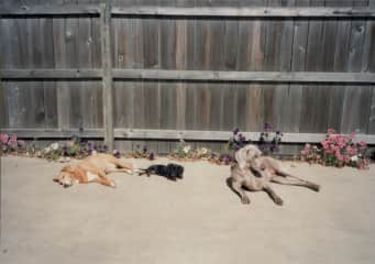 Tippy, Chelsea & Heidi in TN