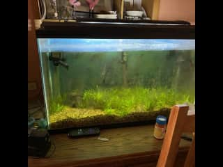 40 gallon freshwater tank. Only 3 fish right now