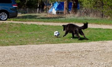 At the cabin in Garden Valley, ID  Kindle loves to play soccer.