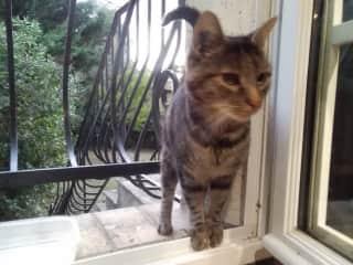 Tigga the cat in Valbonne