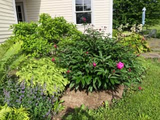 Perennial beds and patio behind the house