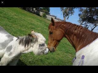 Dodge and Jenny the donkey