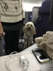 Nala receiving first class care!