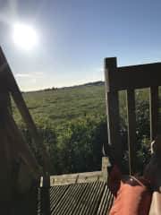 View from tree house