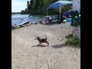 Tito loves the beach across the street at George  Rogers Park.
