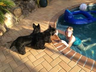 Sue cooling of,  Ewan and Misie, two Scotties in Brisbane Australia