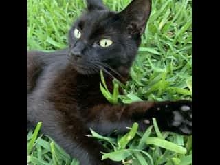 My rescue cat Ditch