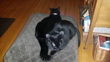 Houdini and Thunder (aka kitten)