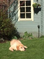 Milo loving the sunshine