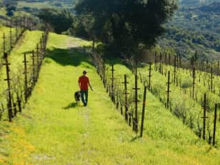 Mark with one of the girls walking the vineyards.  Sonoma, CA 2016