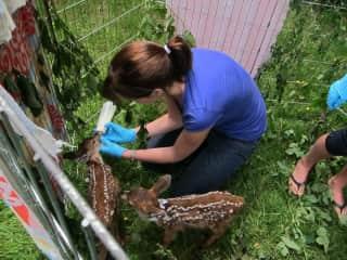 Wildlife rehabilitation in British Columbia