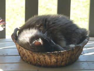 Kitty in a basket. Petey's favourite place on the deck.