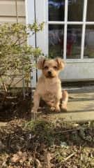 My pup son, Dutch!