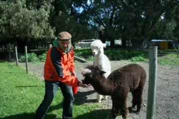 Richard with Alpacas, WA Australia