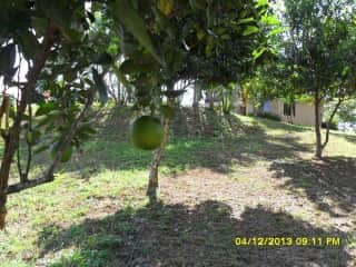 There are fruit trees and coffee trees and a little garden area!