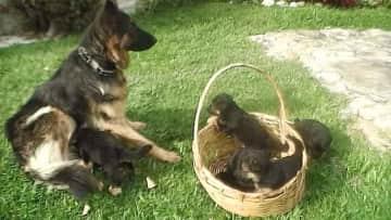 Naya and her babies