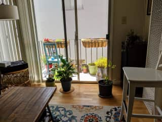 Here's a picture of my living room and (little) balcony. I'm clean and like plants :)