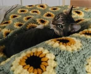 Cozy kitty!