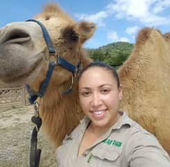 Ana the Bactrian camel I trained to walk on harness. She is one of my favorite animals I worked with