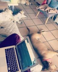Dog Pack naptime